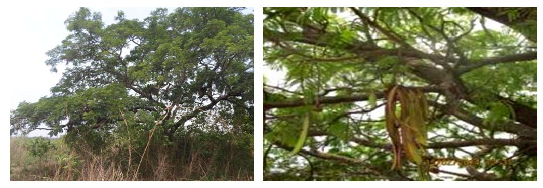 Photo 1 & 2